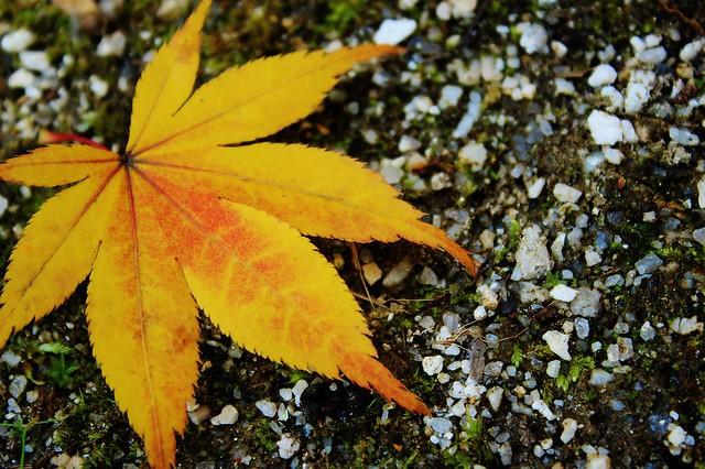 Autumn Campaign!!~秋ファスティング~